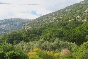 Buljarica Maslinjak hills