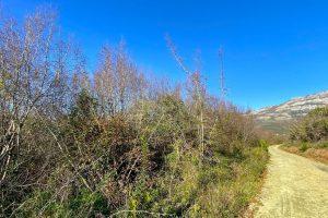 Buljarica path